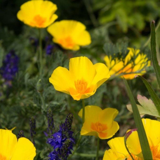 nature-flowers